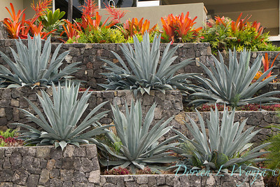 Rock wall terrace Agave_010
