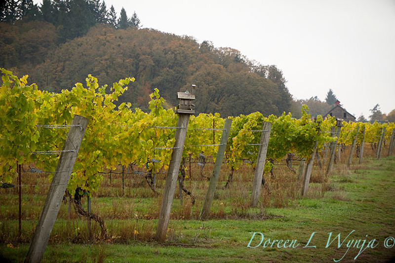 Witness Tree Vineyard_023