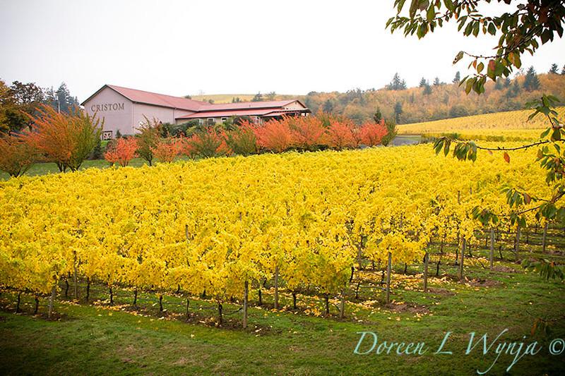 Cristom Winery_004