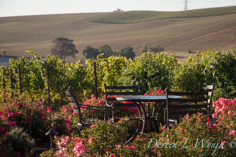 pink roses & vineyard - outdoor living_5142