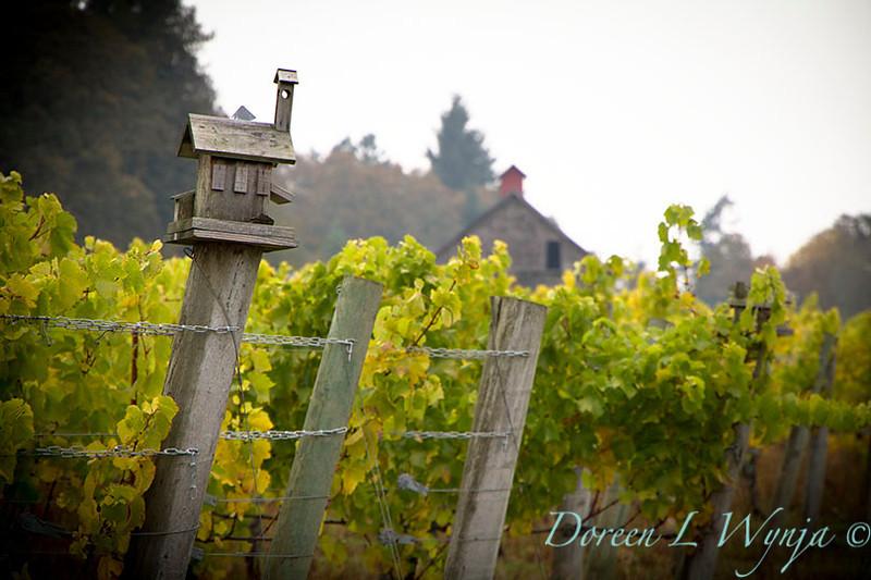 Witness Tree Vineyard_027